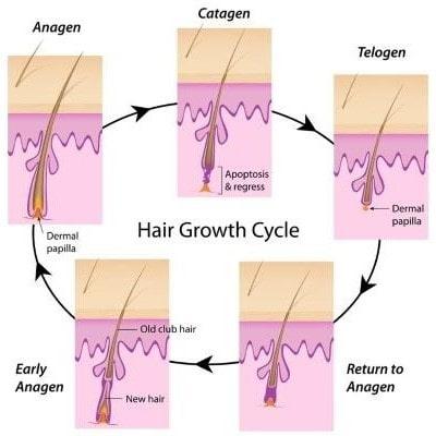 Haarwachstumsphasen Darmstadt Laser Haarentfernung